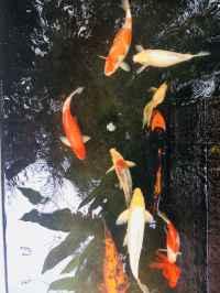 fish pond water fountain evoma bangalore